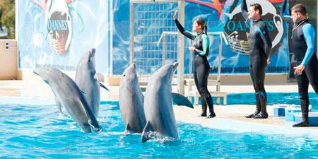 delfinari1